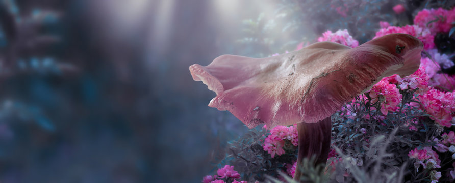 Magical fantasy large mushroom in enchanted fairy tale forest with fabulous fairytale blooming pink rose flower garden on blurred mysterious blue background and shiny glowing moon rays in the night