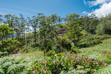 Scenic view over Eravikulam National Park  in Kerala, South India on sunny day