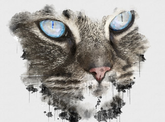 Canvas Prints Hand drawn Sketch of animals Digital watercolour painting close up photo of a cute Cat. Beautiful paint of small carnivorous mammal. House Cat Animal. Canvas Wallpaper of Human Favorite Pet. Creative Digital Paintings