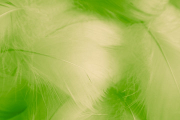 Beautiful abstract colorful white blue and light green feathers on white background and yellow feather texture on white pattern and green background, colorful banners Wall mural