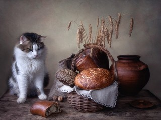 Still life with bread and curious spotted cat