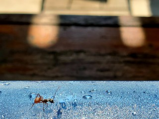 The black ant are on a plastic Cold water bottle that is on the table. Take a blurred picture blackground