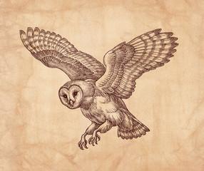 Hand drawn illustration, flying owl, vintage style.