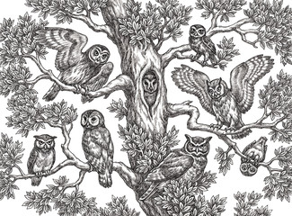 Hand drawn illustration in the engraving style, owls on the tree.