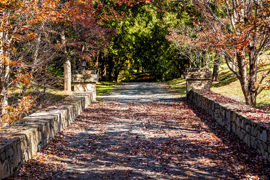Entrance with road during red maple autumn in rural countryside in northern Virginia estate with trees lining path street and fallen foliage leaves