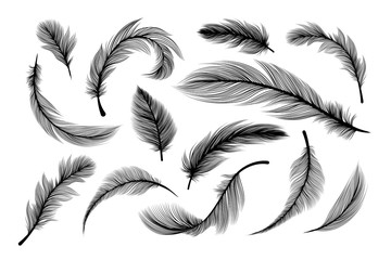 Feathers, vector black silhouettes with fluffy plumage texture. Feather quills flying and falling, abstract bird plume black on white background, isolated design elements with laser cut effect Fotomurales