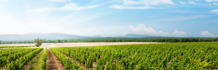 Photo sur Aluminium Vignoble Landscape of vineyard