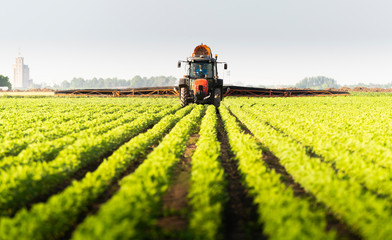 Fotomurales - Tractor spraying soy field in sunset.