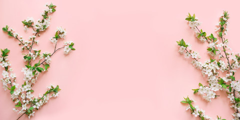 Spring white blossom branches on pink. Floral pattern. Space for text. Banner or template. View from above, flat lay.