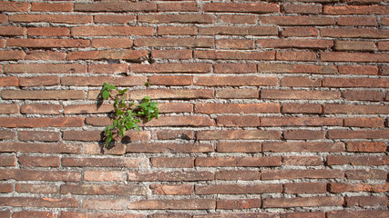 Old rough brick wall with plants texture