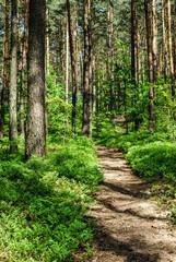 las ścieżka w lesie przyroda