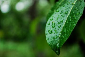 Obraz liść roślina ogród krople - fototapety do salonu