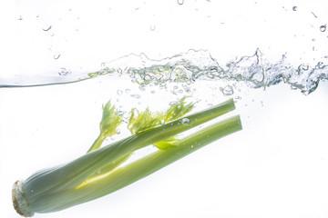 Celery Water Splash on white background