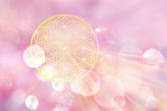 Symbol der Blume des Lebens entsendet liebevolle Energie und strahlt in leuchtendem rosafarbenem Licht