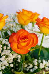Orange roses bouquet, with white background