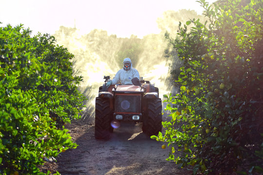 Farmer driving tractor spraying pesticide and insecticide on lemon plantation in Spain. Weed insecticide fumigation. Organic ecological agriculture. A sprayer machine, tractor spray herbicide.