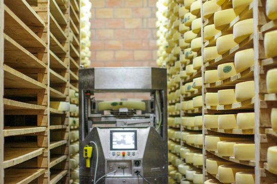 modern and traditional cheese making with high tech robot assisting