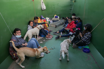 A team of volunteers takes care of dogs and other furry animals rescued from the homes of residents who have evacuated from the erupting Taal Volcano in Batangas