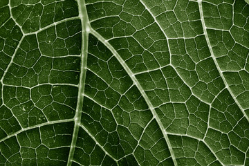 green leaf close up in the detail Fototapete