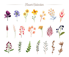 hand painted flower watercolor collection