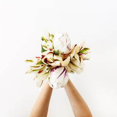 Female hands holding tulip flowers bouquet on white background. Flat lay, top view minimal floral...