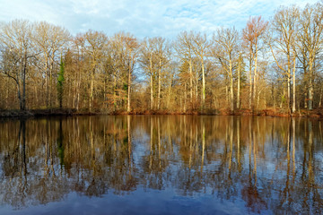 Evees pond in Fontainebleau forest