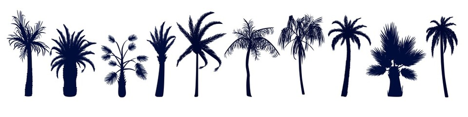 Set of different tropical palm trees. Trees in a simple style in different shapes with different leaves.