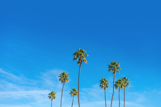 California palm trees with blue sky