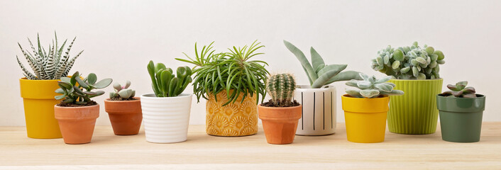 Collection of various succulents and plants in colored pots. Potted cactus and house plants against light wall. The stylish interior home garden