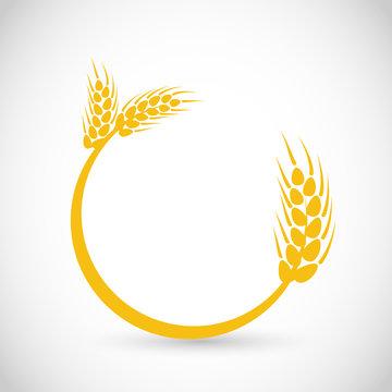 Beautiful wheat, grain golden vector round frame