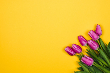 Photo sur Aluminium Tulip Pink, purple tulips in corner on yellow background