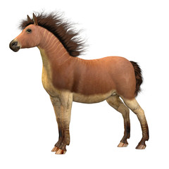 Equus Scotti Horse - This primitive horse lived in North America during the Pleistocene Period and became extinct.