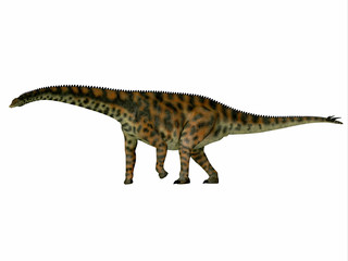 Spinophorosaurus Dinosaur Side Profile - Spinophorosaurus was a herbivorous sauropod dinosaur that lived in the Jurassic Period of Niger, Africa.