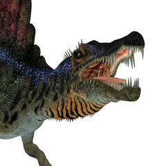 Spinosaurus Dinosaur Head - Spinosaurus was a carnivorous dinosaur that hunted in Africa during the Cretaceous Period.