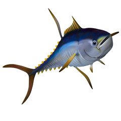 Yellowfin Tuna - The Yellowfin Tuna is a predatory saltwater fish that lives in oceans around the world.