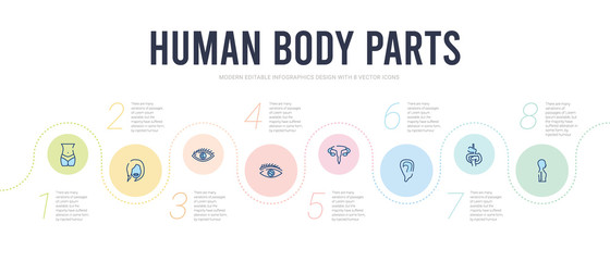 human body parts concept infographic design template. included column inside a male human body in side view, digestive system, ear lobe side view, excretory system, eye with lashes, eye variant with