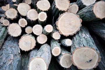 Poster de jardin Texture de bois de chauffage Close up shot of wood logs