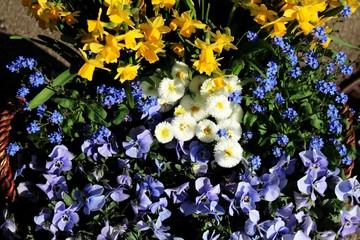 Frühlingsblumen in einem Korb