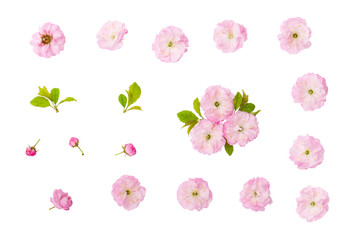 Isolated spring flowers. Almond pink flowers, green leaves and  bud isolated on white background with clipping path Fotobehang