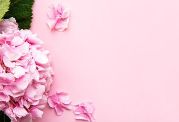 Zelfklevend Fotobehang Hydrangea Pink hydrangea flowers on pink background