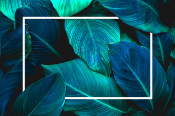 Wall Mural - tropical leaves with white frame, abstract green leaves nature view of leaf in garden