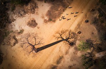 Aluminium Prints Baobab Baobab madagascar vue aerienne