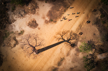 Fotobehang Baobab Baobab madagascar vue aerienne