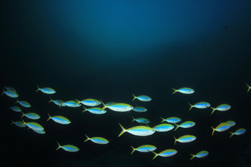 Fototapete - Underwater coral reef and fish in ocean