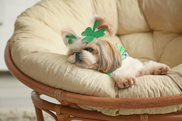 Cute dog on lounge chair at home. St. Patrick's Day celebration
