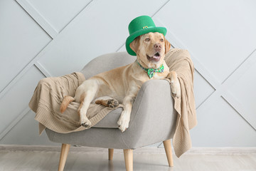 Cute dog with green hat on armchair. St. Patrick's Day celebration