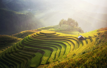 Tuinposter Rijstvelden Rice fields on terraced of Mu Cang Chai, YenBai, Vietnam. Vietnam landscapes.