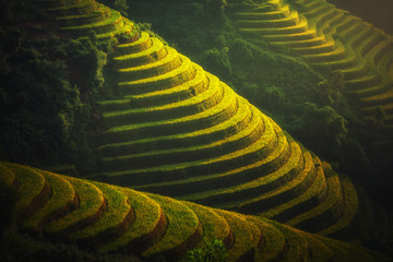 Photo sur Aluminium Les champs de riz Rice fields on terraced of Mu Cang Chai, YenBai, Vietnam. Rice fields prepare the harvest at Northwest Vietnam. Vietnam landscapes.