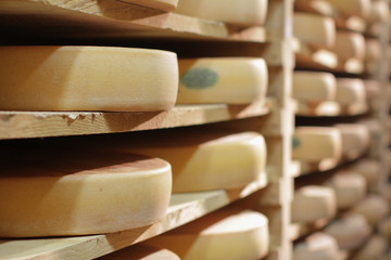 At professional French cheese maker - Comté cellar on traditional wood