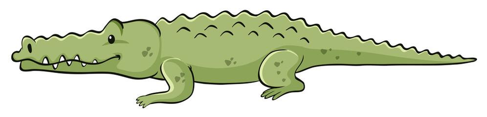 Green crocodile on white background